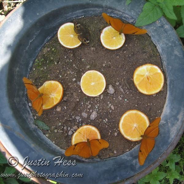 Mmm, Orange Juice!
