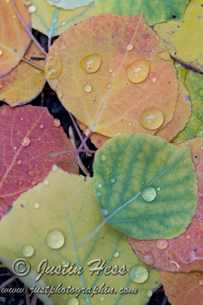 Droplets of Color