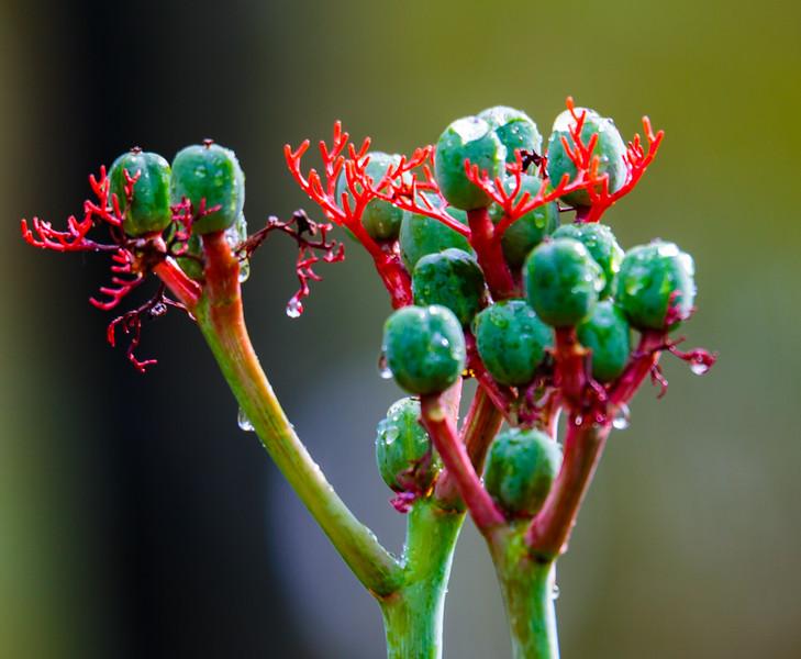 Costa Rica Flora