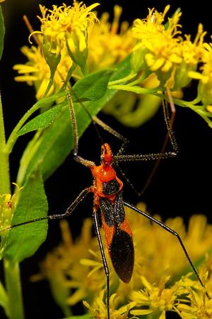 Backyard Bugs with the Nikon D7100 & Tokina 100mm f/2.8 lens