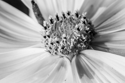 Macro of flower. Government House. Victoria, BC, Canada