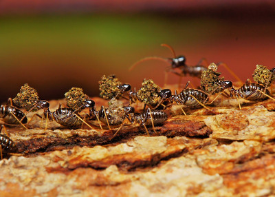 Marching termites