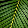 Hawaiin Jungle