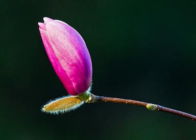 Budding flower 2
