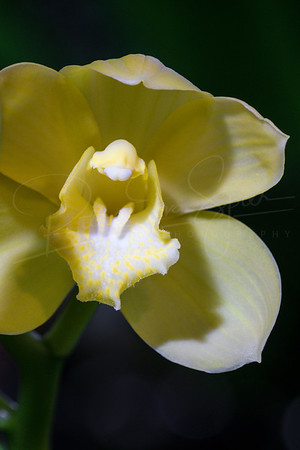 Orchid Smile