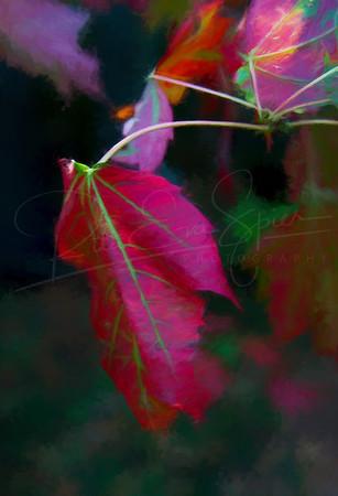 Red Canadian Leaf