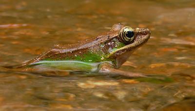 froggie 1280224_filtered