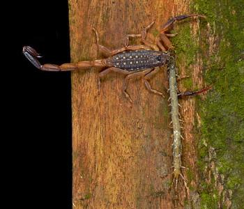 Scorpion vs centipede1260467_filtered