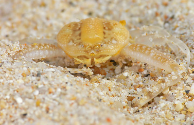 crab face_019027_filtered