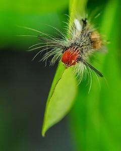 caterpillar 2189-Edit