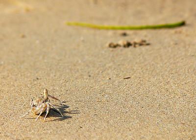 crab on beachPhu _019394_filtered