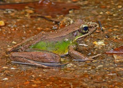 frog 1280217_filtered