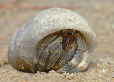 Hermit crab 019444_filtered