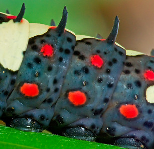 Caterpillar pads