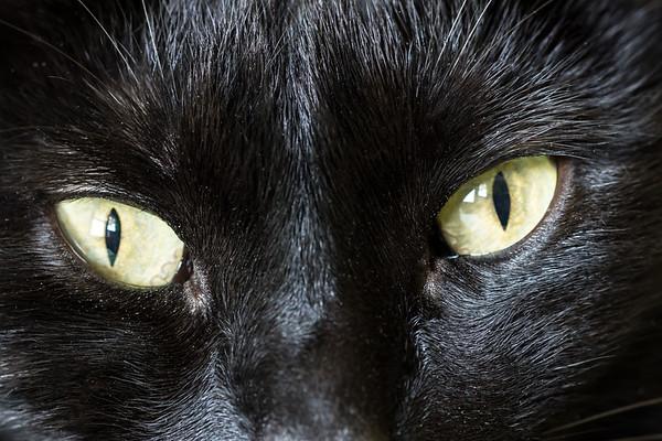 Macro Black Cat Eyes