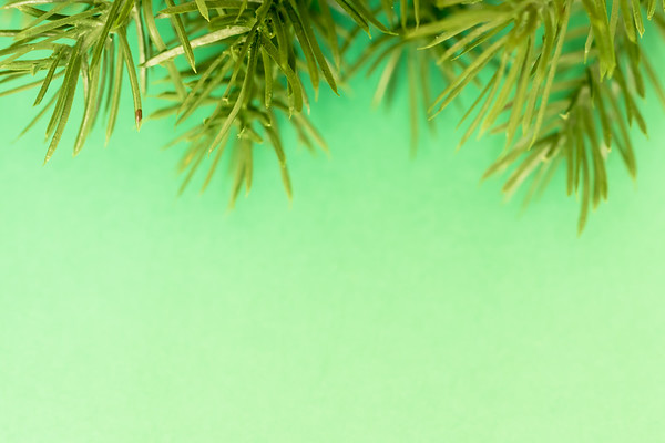 Green Pine Branches on a Green Background