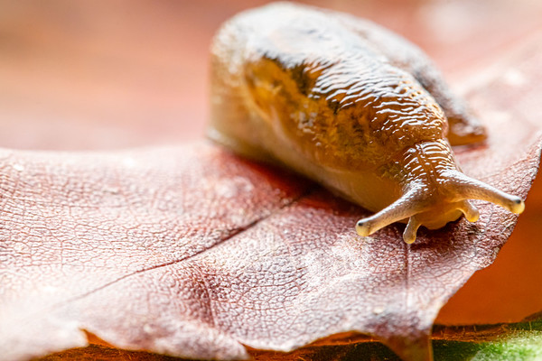 Slug on Colorful Leaves