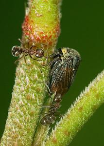Tending to Treehopper