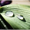 Water droplets on a leaf (macro)