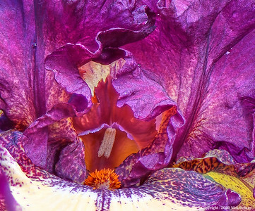 FLOWERS-Macro Photography