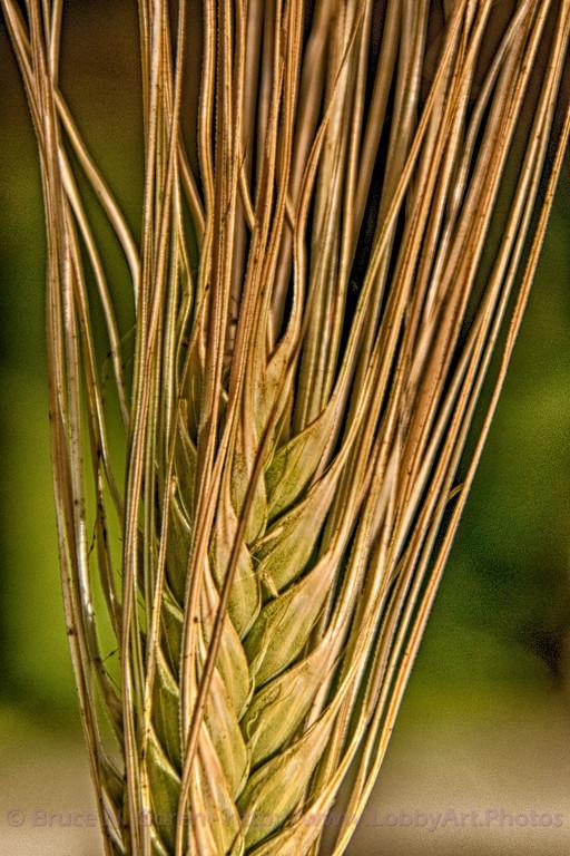Grainy Image