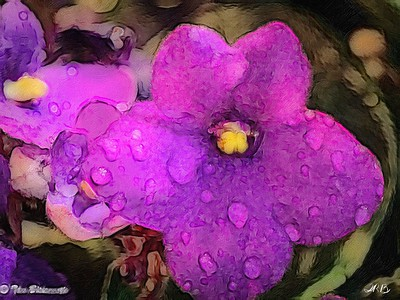 Painted African Violet