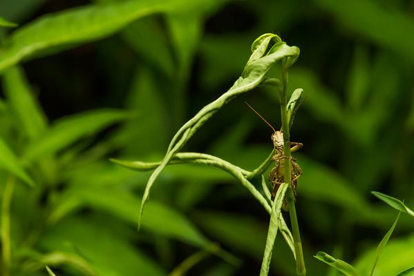 Curious Grasshopper