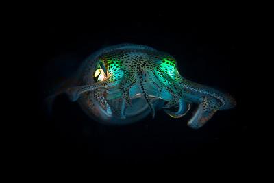 Underwater Macro