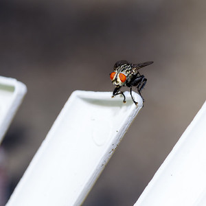 Chair Fly