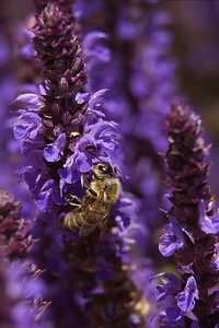 Busy bee on the Sage print one for Kathy