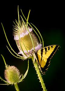 Butterfly 8449