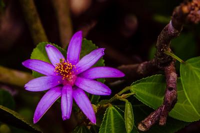 Flower 6882