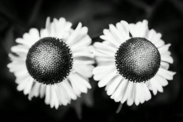 Untitled Flowers (2)