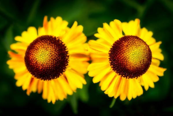 Untitled Flowers