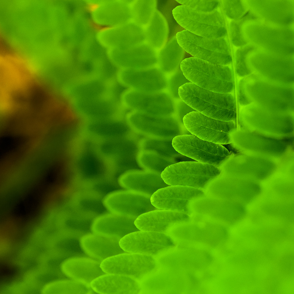 I'm not sure this works, but I kind like it and had some fun with the sliders in LR4.  It's ostrich fern I believe.