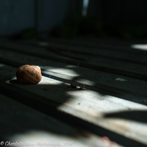 Snail in light
