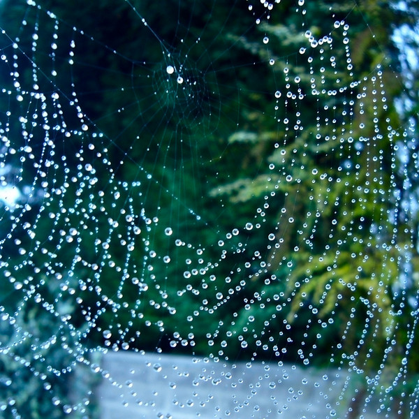 Dew on spider's web