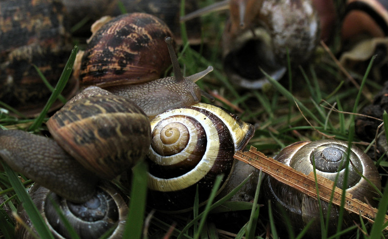 Congestion in snail land