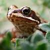 A frog in my garden