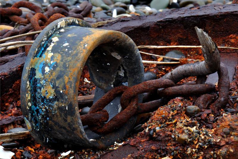 Washed Ashore<br /> Guemes Island, WA