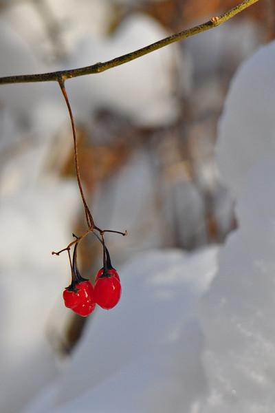 Winter Color<br /> Fairhaven Park, WA