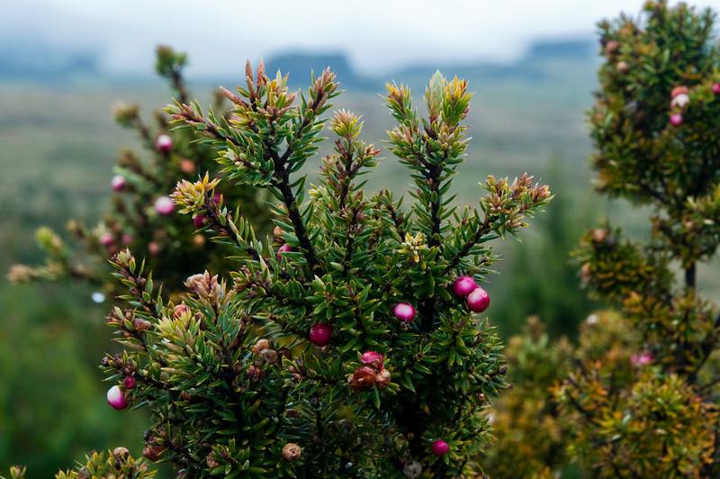 Maui plants