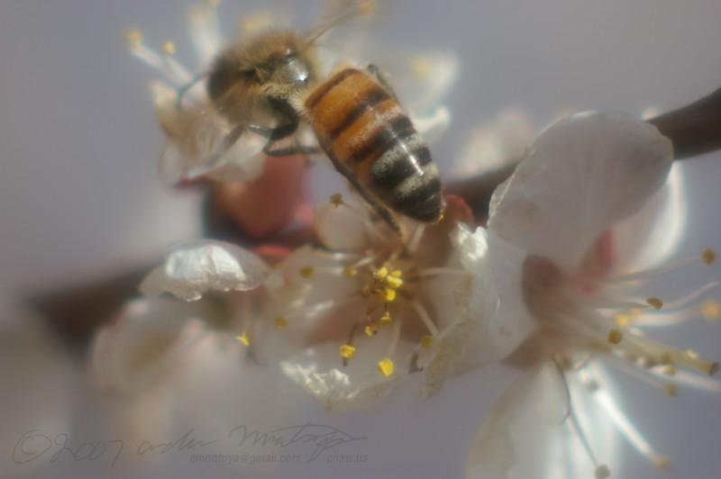 Dreams of honey