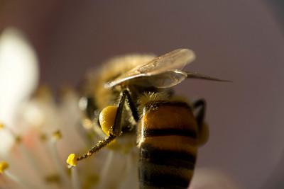 Pollen Junkie