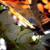 Blue Iridescence