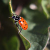 April  Lady Bug