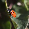 April  Lady Bug