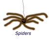Decided to change something silly and fake because some people don't respond well to seeing a spider right in their face. Even if it is only on a computer,