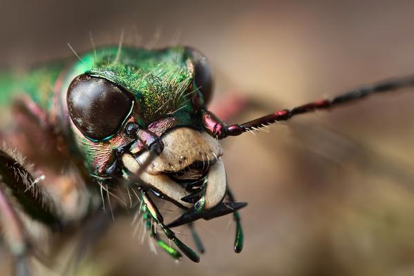 Bug Portraits