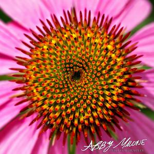 Abby Malone Photography